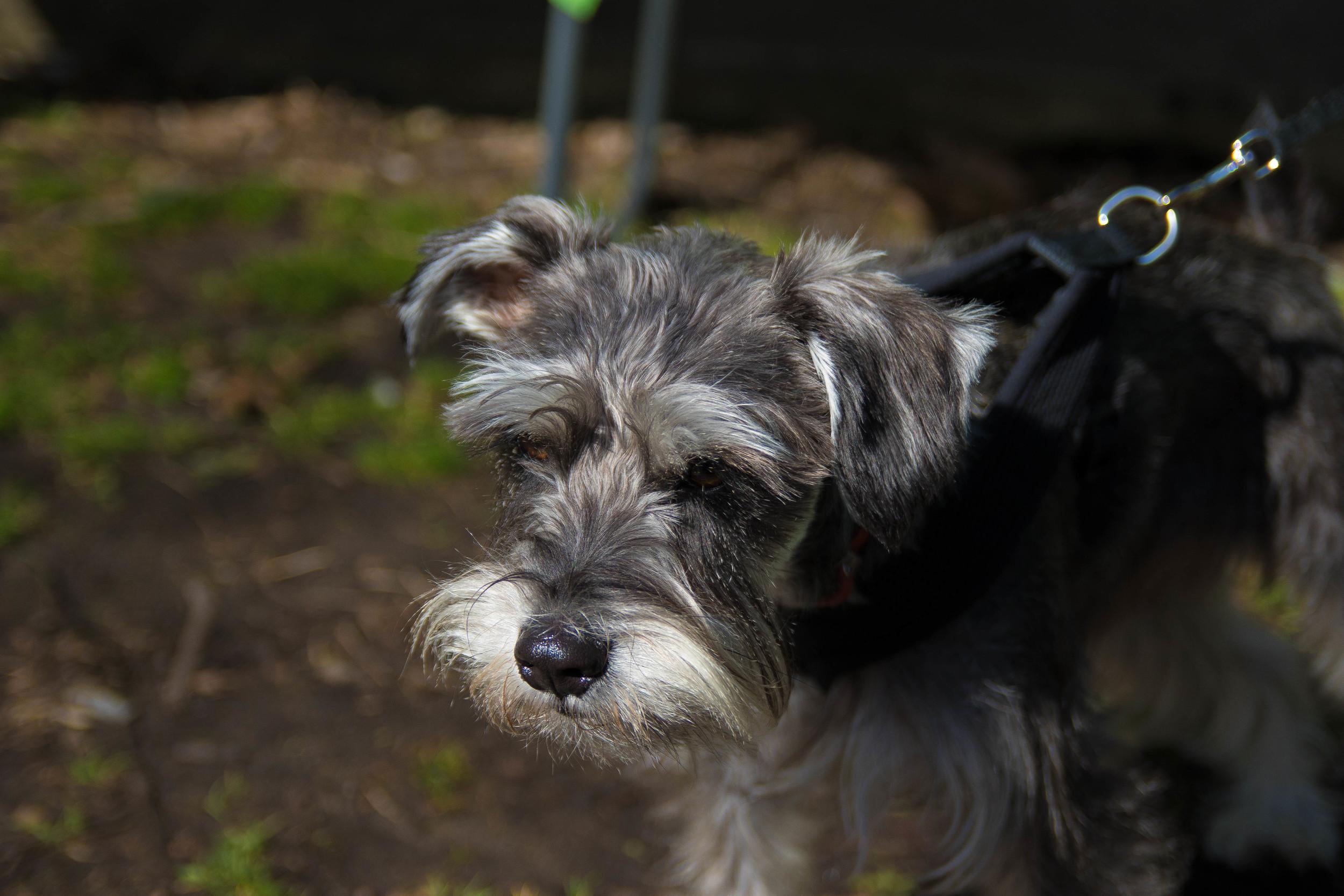 Dog_EasterEggHunt-28.jpg