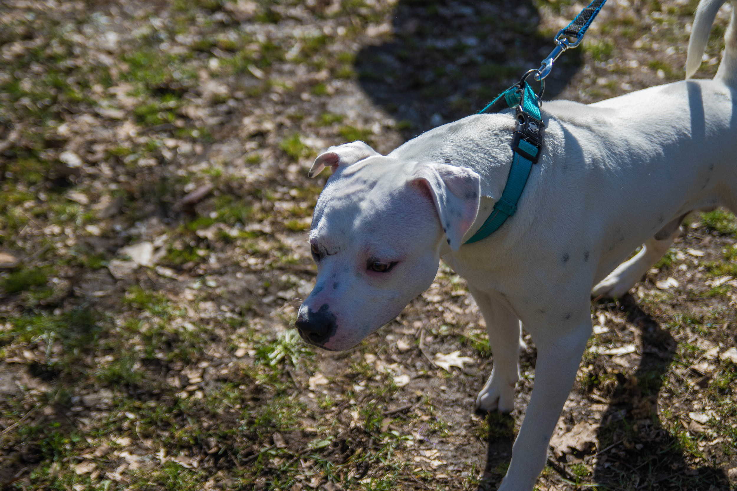 Dog_EasterEggHunt-26.jpg