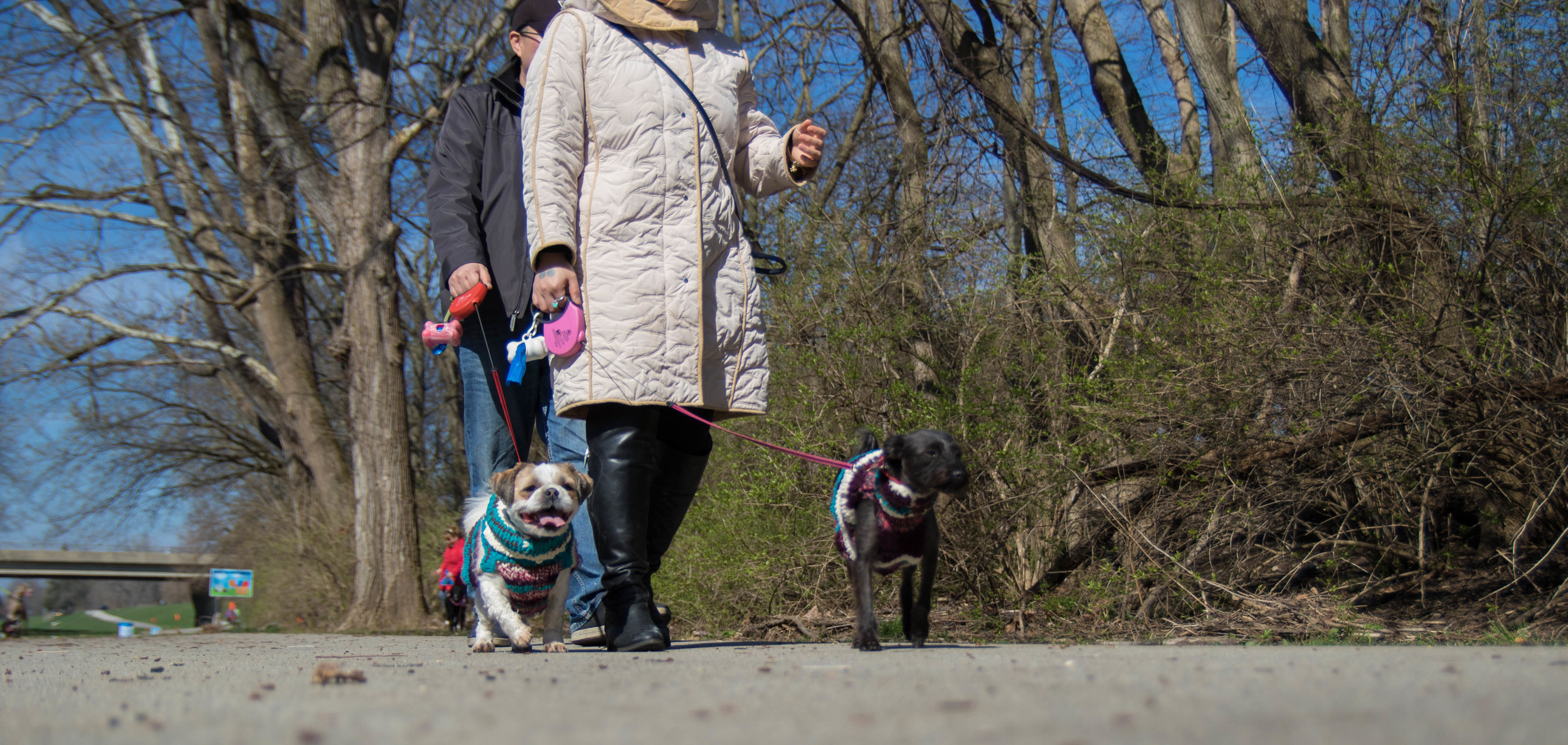 Dog_EasterEggHunt-53.jpg