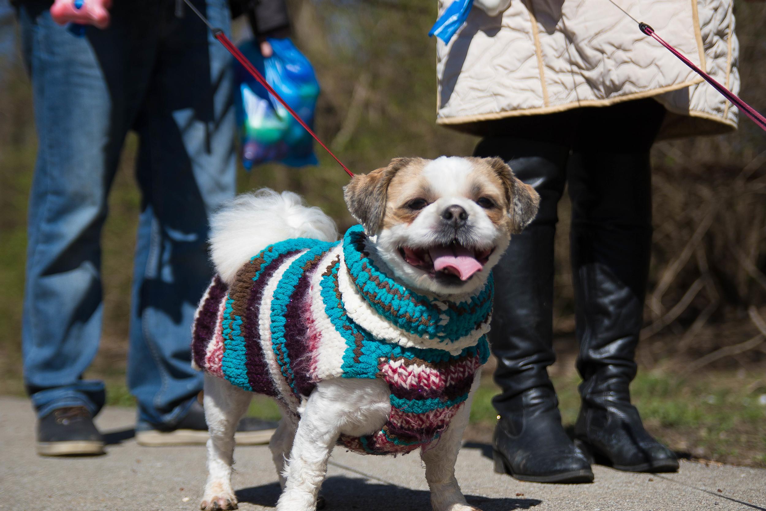 Dog_EasterEggHunt-54.jpg