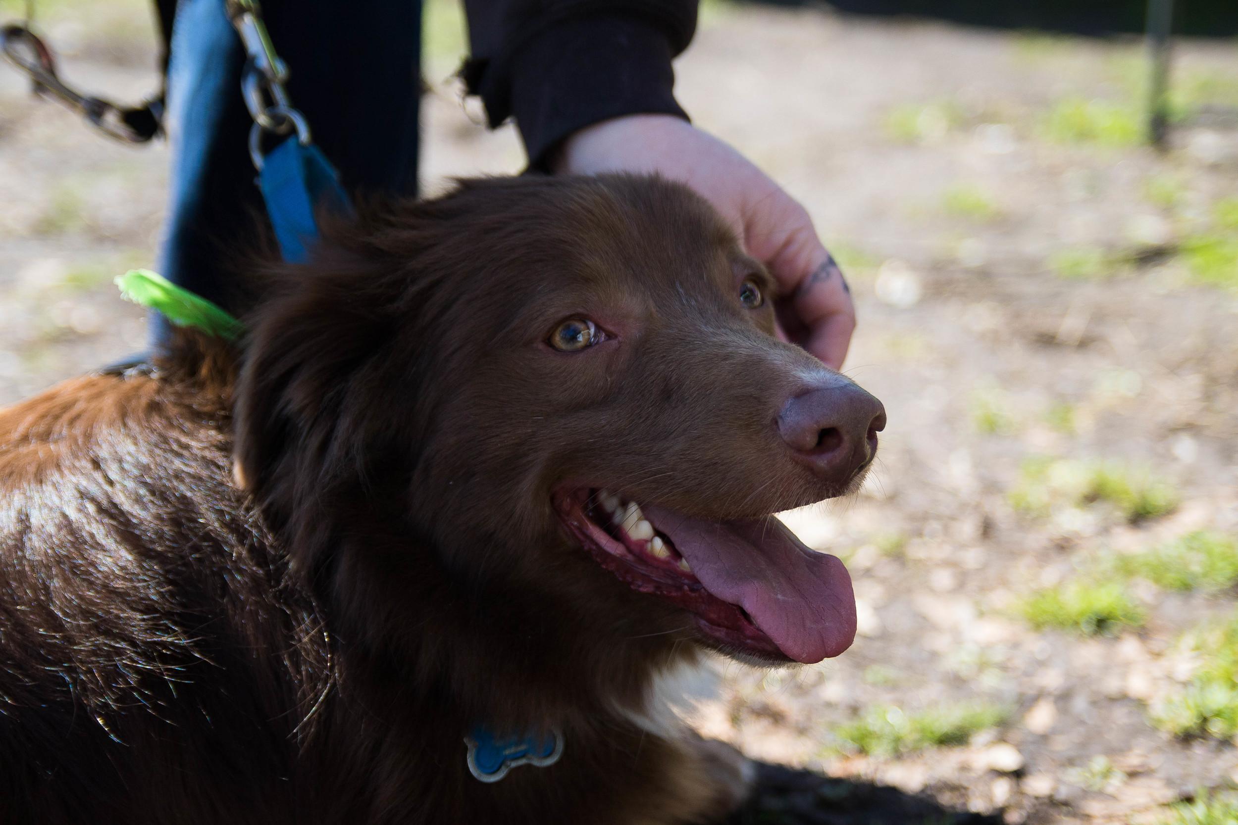 Dog_EasterEggHunt-62.jpg