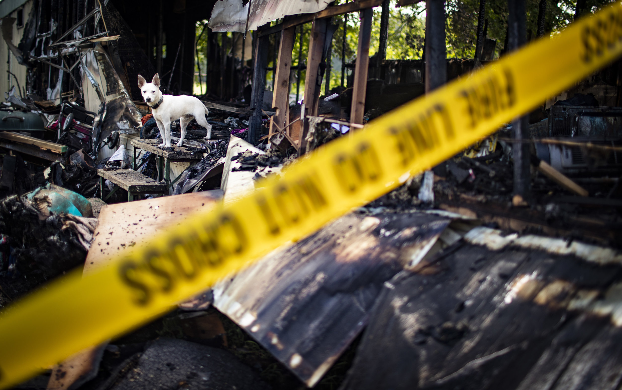 A dog stands in the former doorway of a trailer home that caught fire after being struck by lightning on Thursday, August 16, 2018, at 333 Fairview Boiling Springs Road, Unit 6.