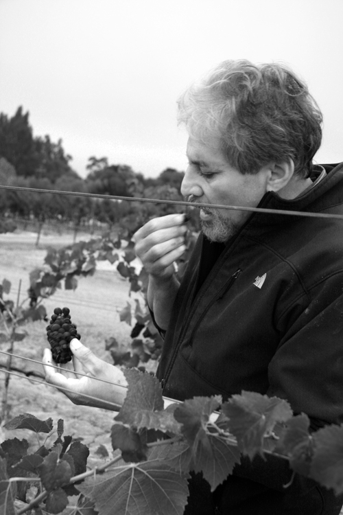 Photo-Diary-Ceja-Vineyards-2012-Harvest-winemaker