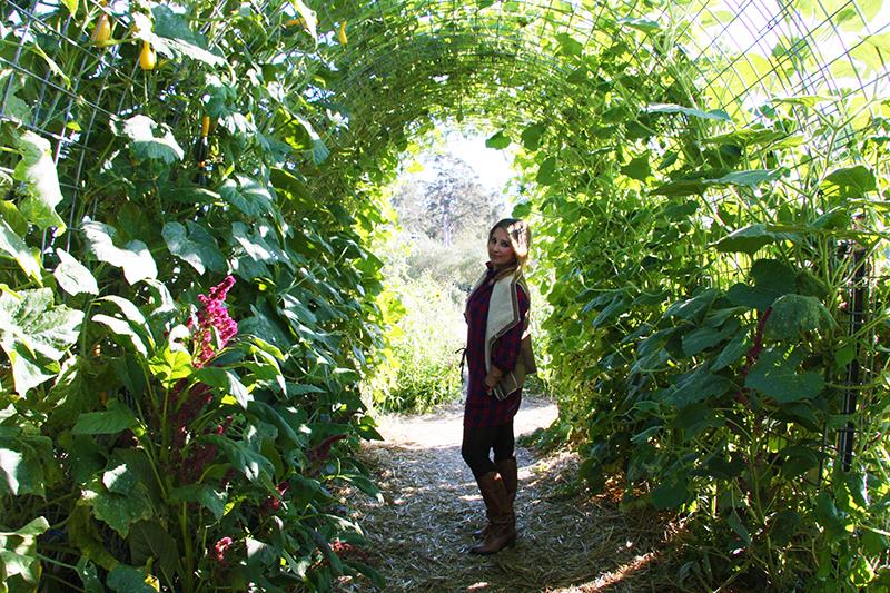 secret-garden-pumpkin-patch-napa-hello-october