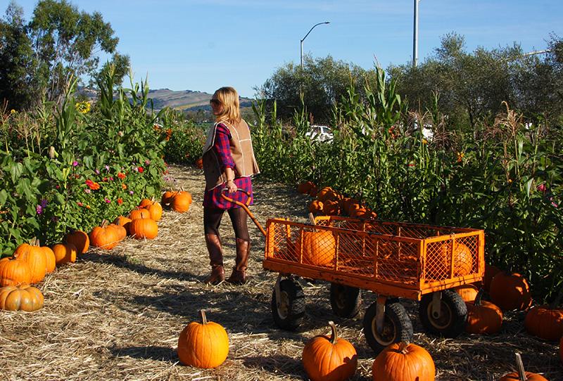 stanley-lane-pumpkin-patch-hello-october