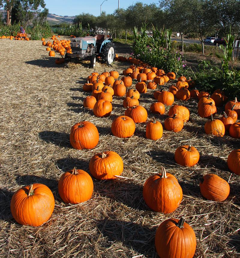 napa-valley-pumpkin-patch-hello-october