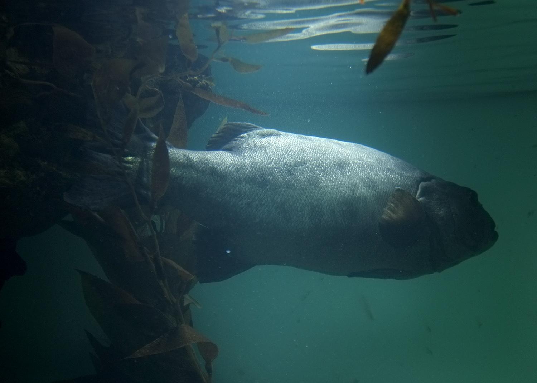 fish_m.DSF5129.jpg