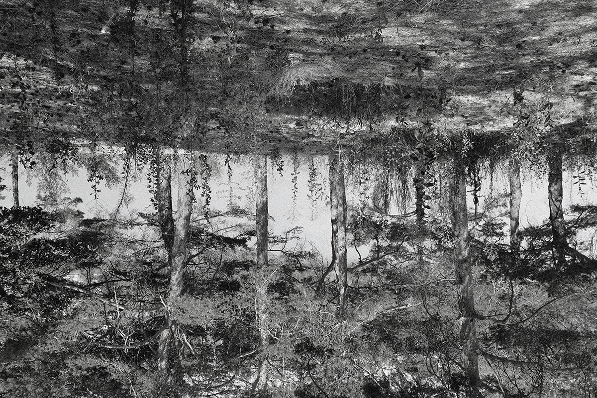 Bild: Roland Zemp   Zitat von Hans Saner aus 'Die Anarachie der Stille '