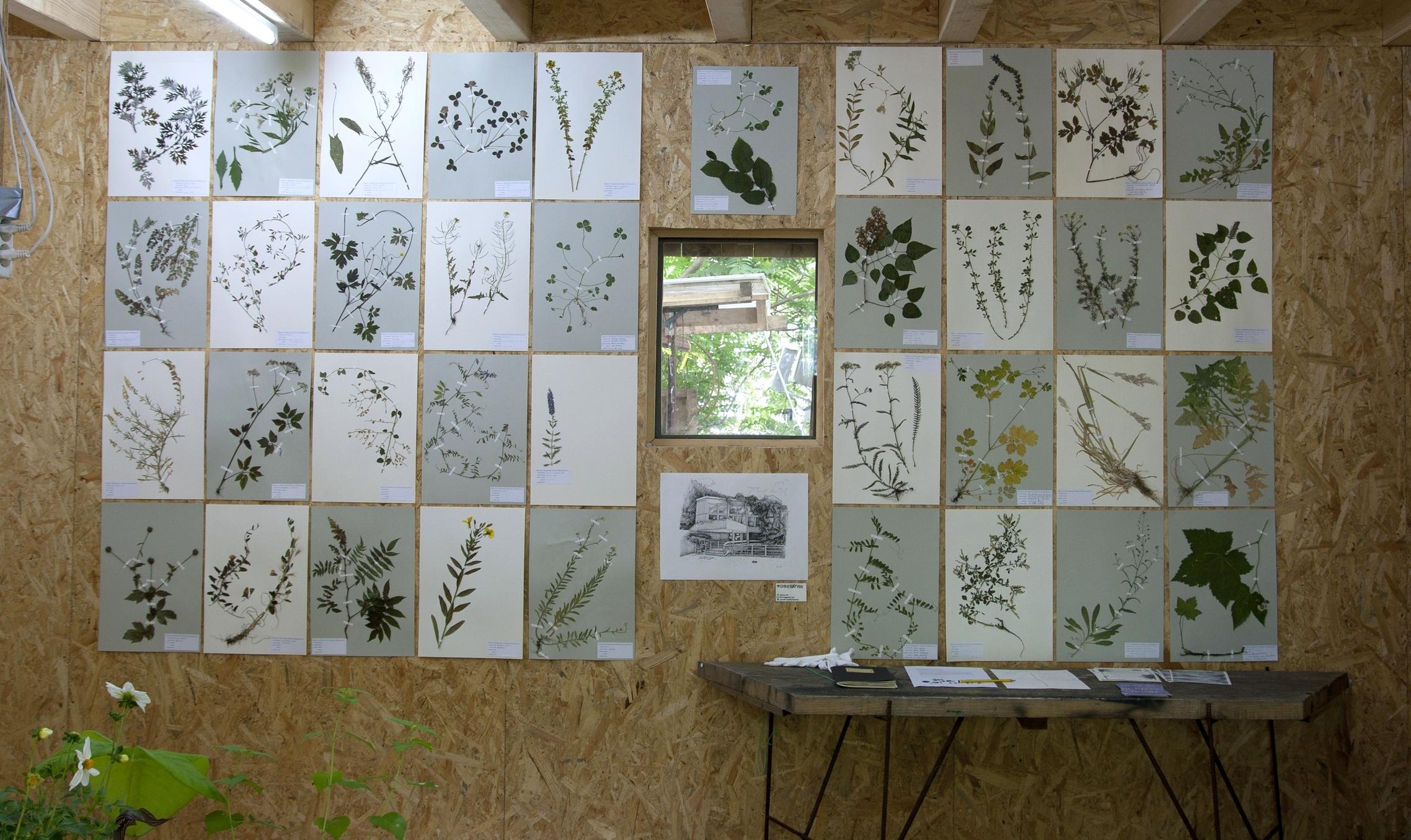 Botanical Drawing Exhibition