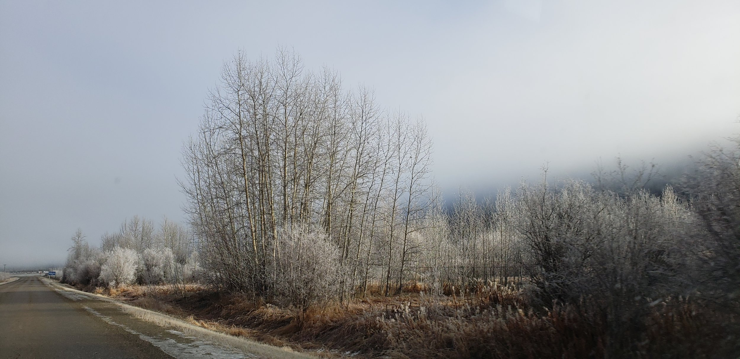 Les arbres et les buissons en bord de route sont givrés
