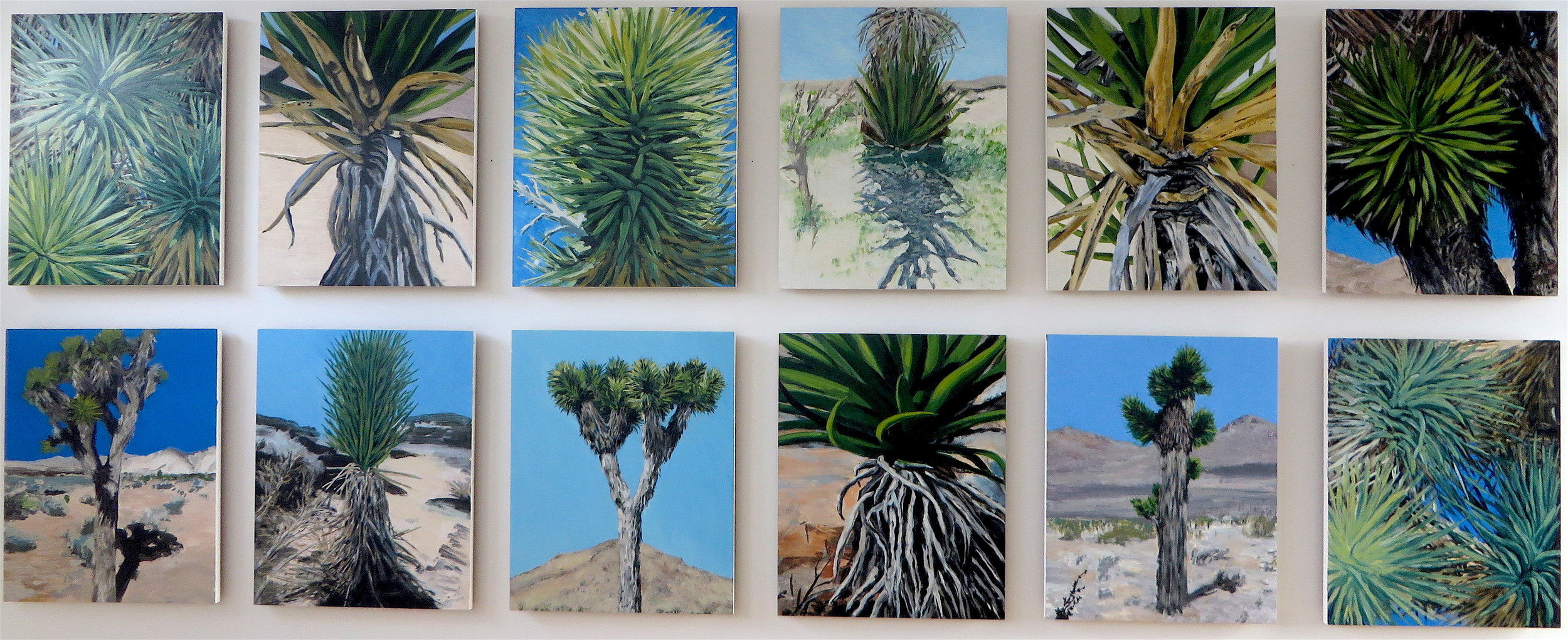 Joshua Tree, Group of 12, 2008
