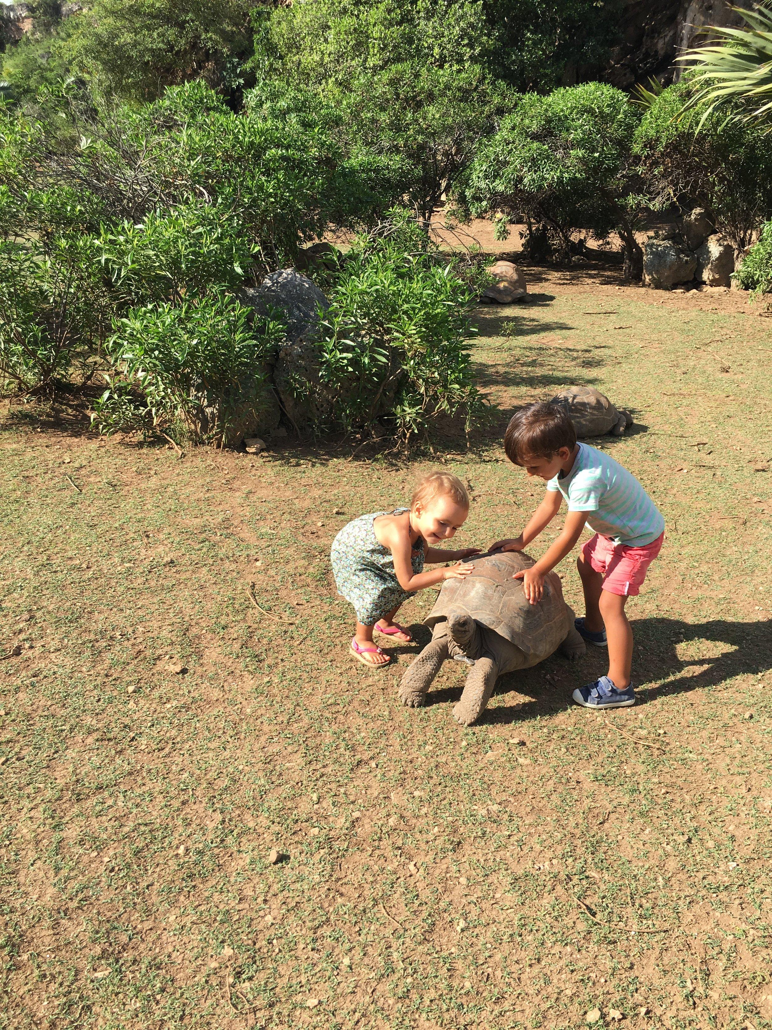 Enfants tortue Rodrigues.JPG