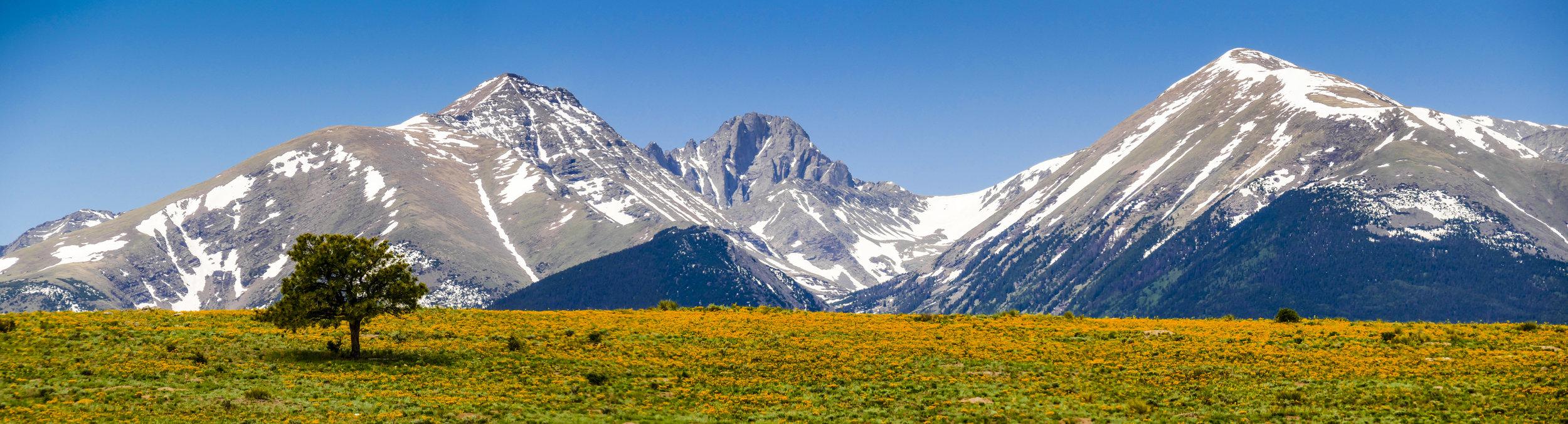 Mountain Meadow, Lone Tree.jpg