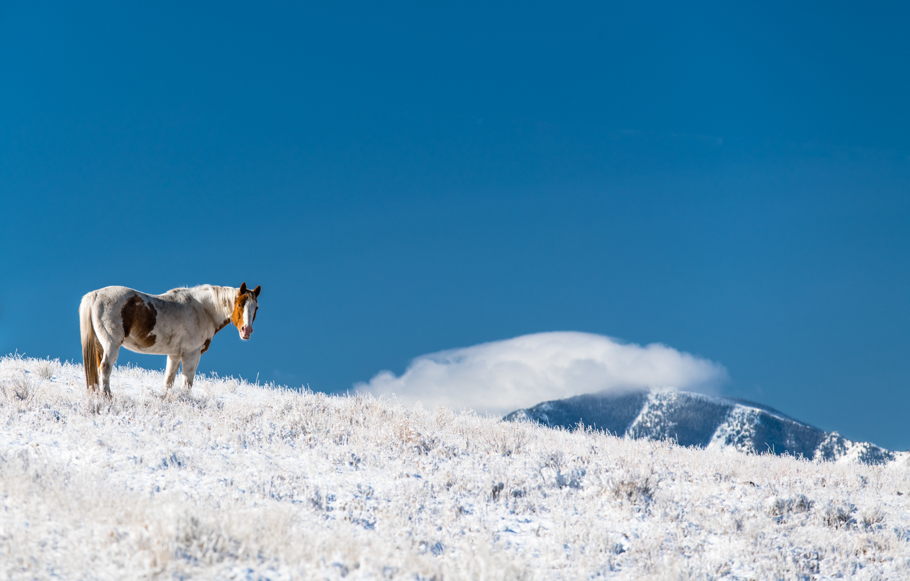 Lone Horse on Snowy Hills