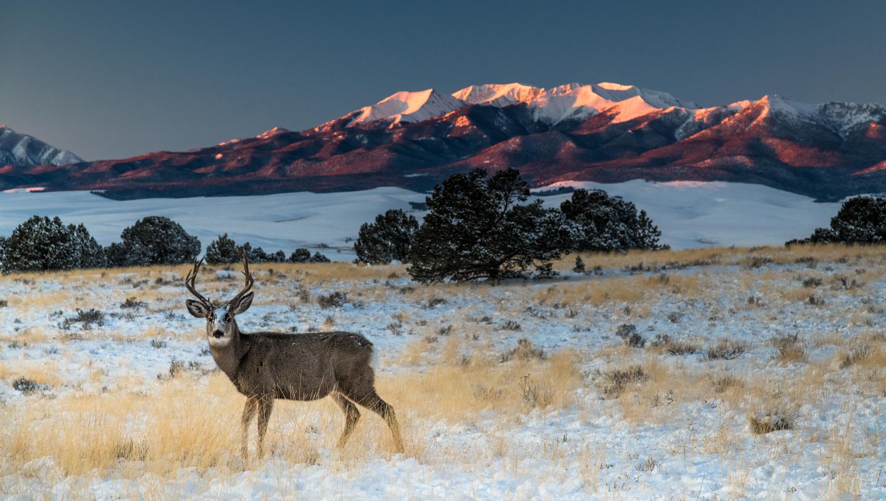 Buck, Meadow, Snow, Sunrise and Mount Herard I web.jpg