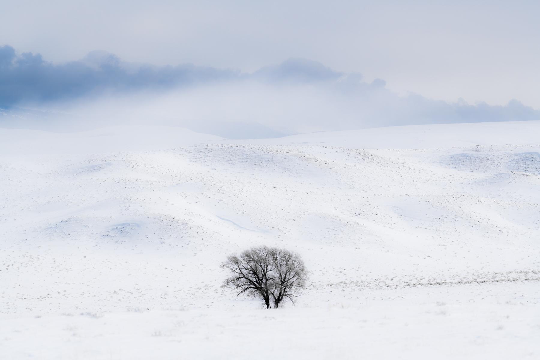 Single Tree in Snowy Hills