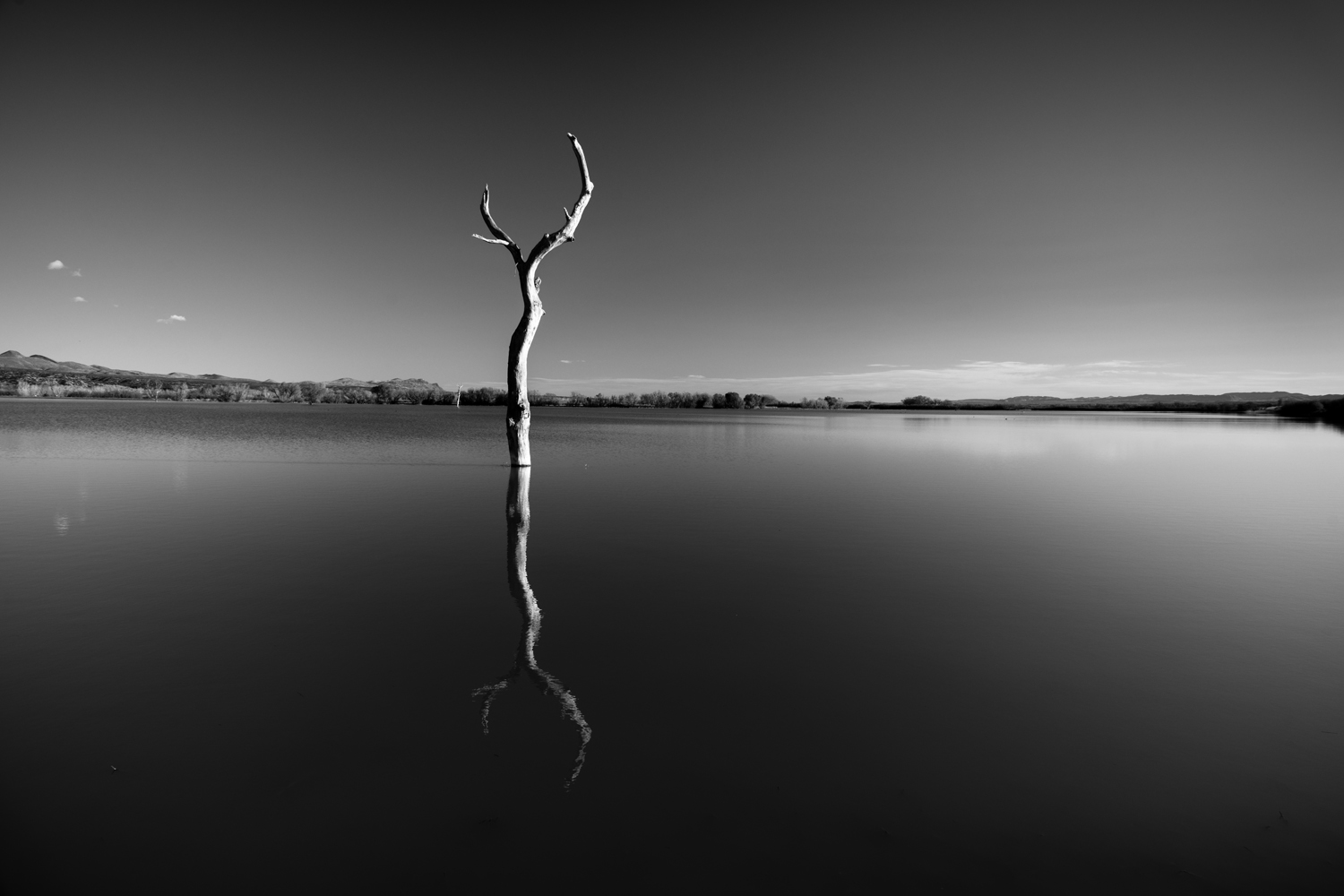 Tree Reflection in Lake