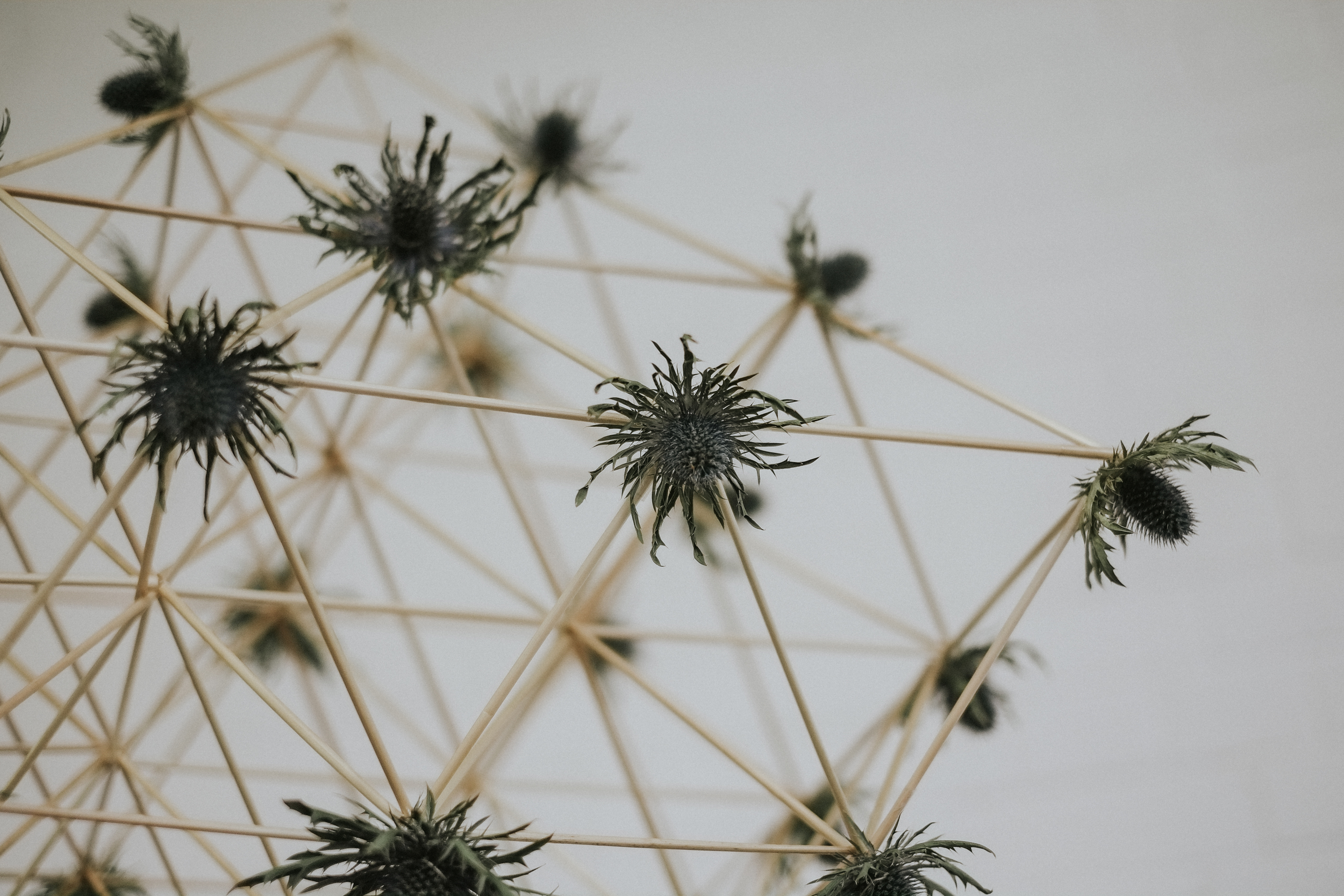 Striking geometric pajaki (traditional Polish chandeliers). This contemporary installation was handmade with rye straws and thistles by the charming Karolina of  bobbin & bow .