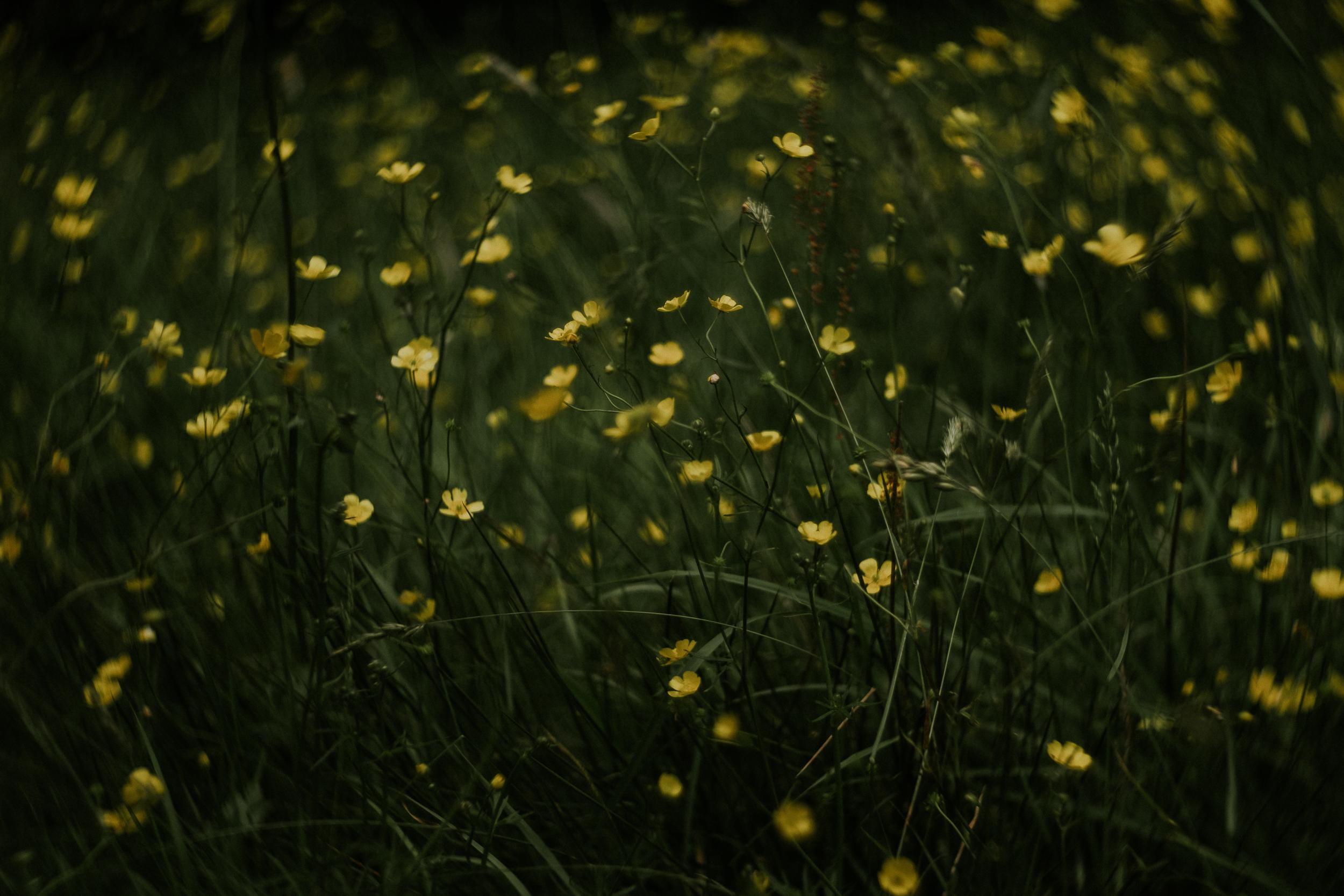 foxandowl.uk_0062.jpg