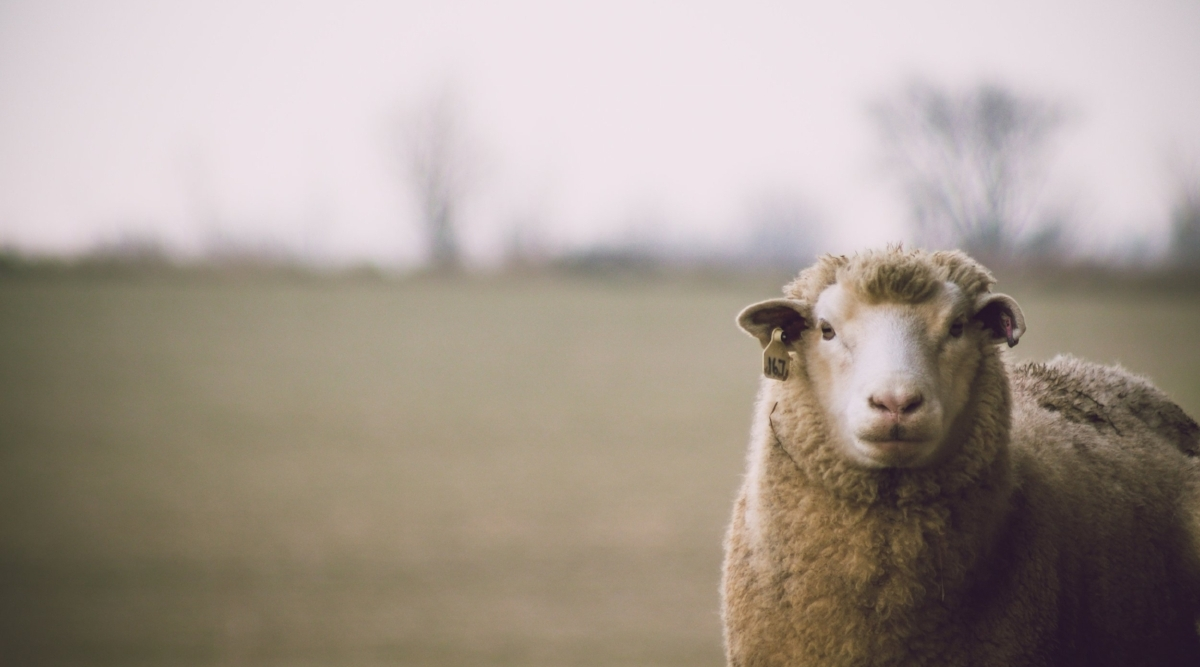 adorable-animal-animal-photography-436793.jpg