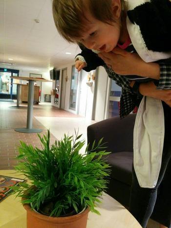 Molly går loss på blommorna. Högst uppskattat av damen i expeditionen.