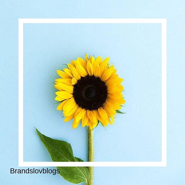 Un peu de sun attitude, c'est mettre dans du soleil dans sa vie ! . Créativité et taux d'engagement... % ✅💜Notre agence aime le l'influence couplé au social média . #influence #socialmedia #spending #culture #anything #instainfluence #instalife #cosmetics #beauty #instacosmetics #agency #instalove #instaskin #instatoday #yello #blue #nature #tournesol