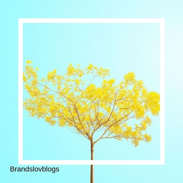 Un peu de sun attitude, c'est mettre dans du soleil dans sa vie ! . Créativité et taux d'engagement... % ✅💜Notre agence aime le l'influence couplé au social média . #influence #socialmedia #spending #culture #anything #instainfluence #instalife #cosmetics #beauty #instacosmetics #agency #instalove #instaskin #instatoday #yello #blue #nature #arbre #fleur