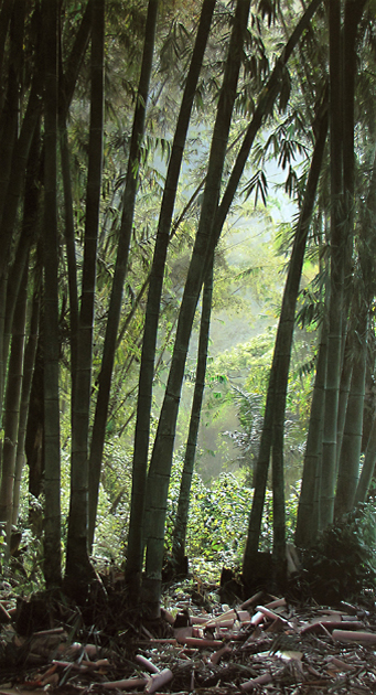Indonesia Bamboo