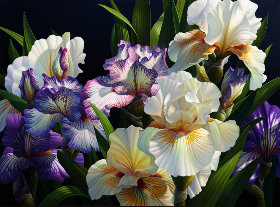 Purple & White Irises