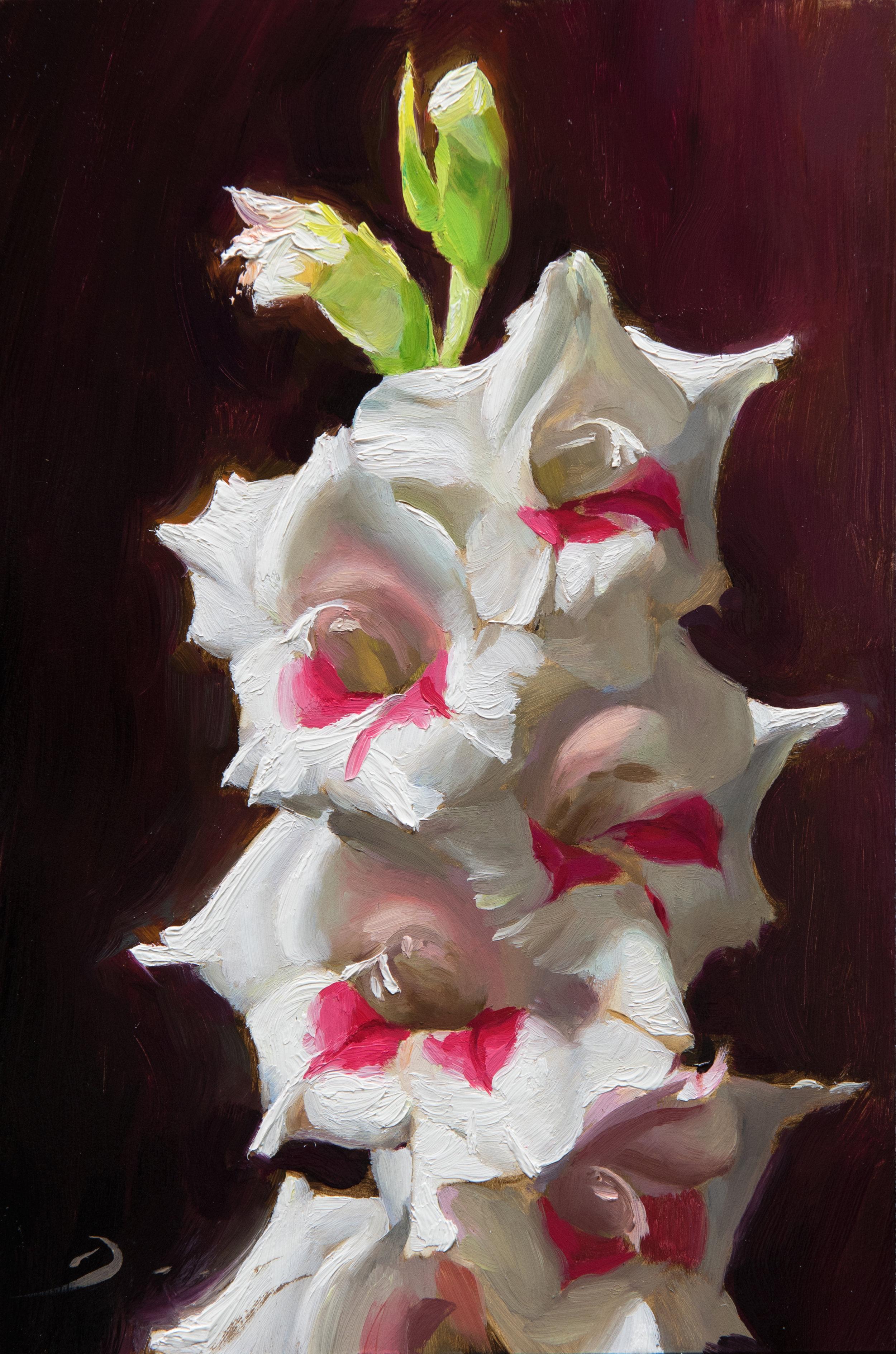 White Gladiolus - July 2016