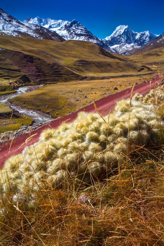 14. Mountain Cacti22.jpg