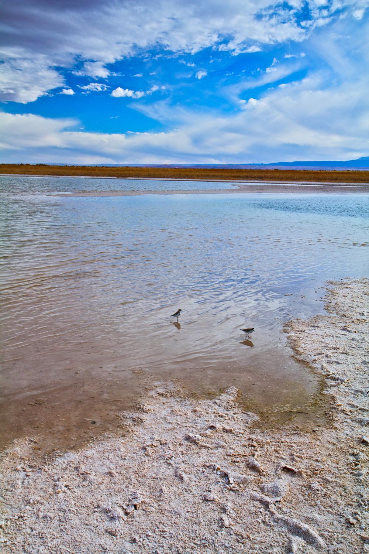 Laguna Made of Salt (Laguna Cejar)2.jpg