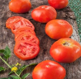 Rutgers - Originally bred for the canning industry. This heirloom is a nice meaty slicing tomato useful for sauce or sandwiches. 75 days from transplant to harvest