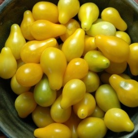 Yellow Pear - these heirloom cherry tomatoes are perfect in your salad