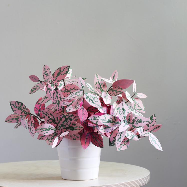 corrie_hogg_polka_dot_paper_plant.jpg