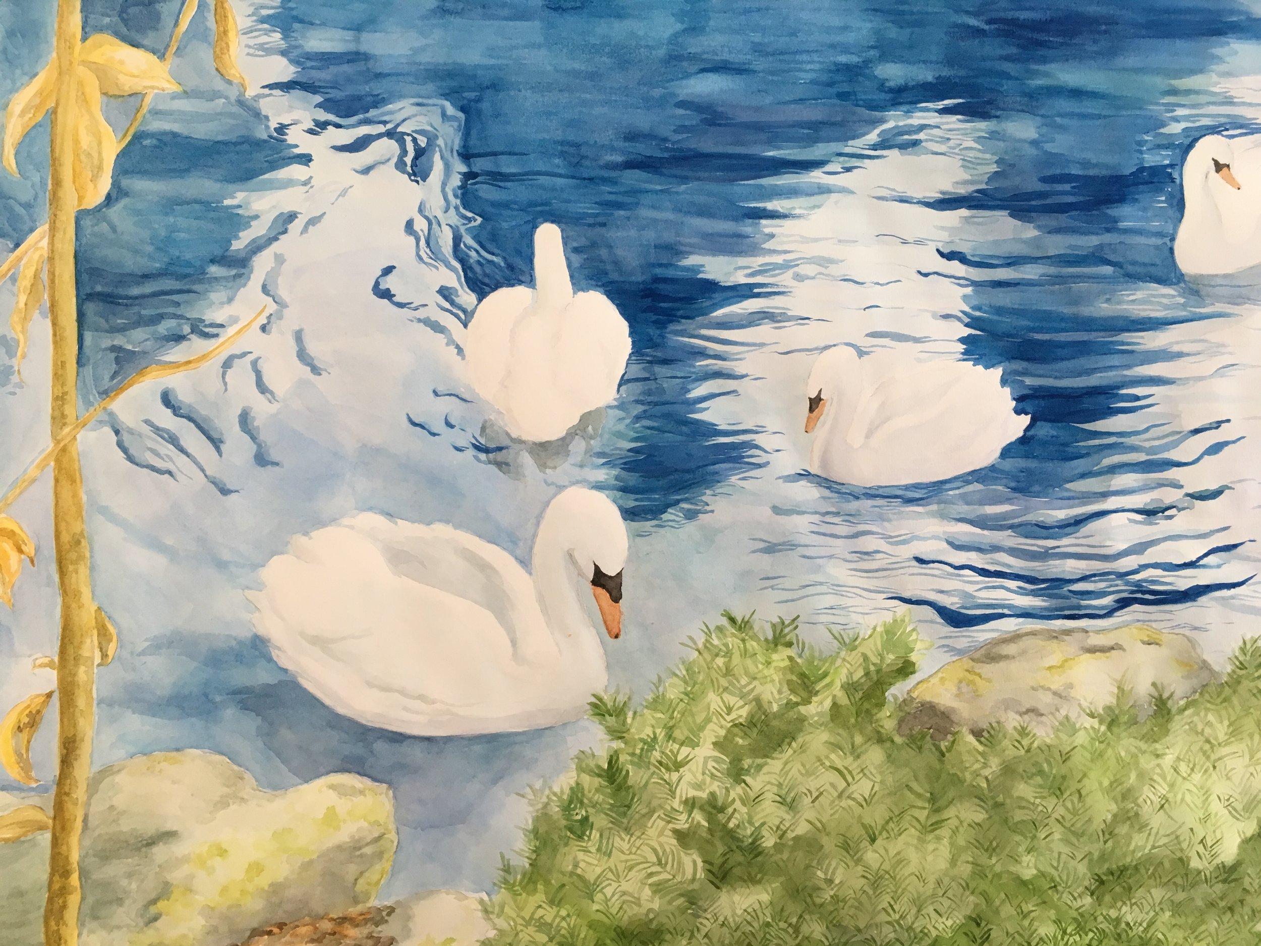 """Winter Swans"""