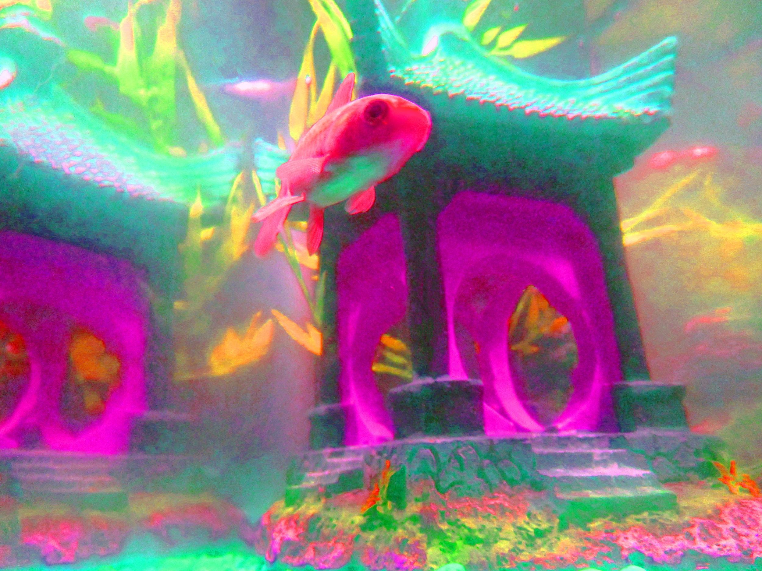 F_McDonnellM_RainbowFish.jpg