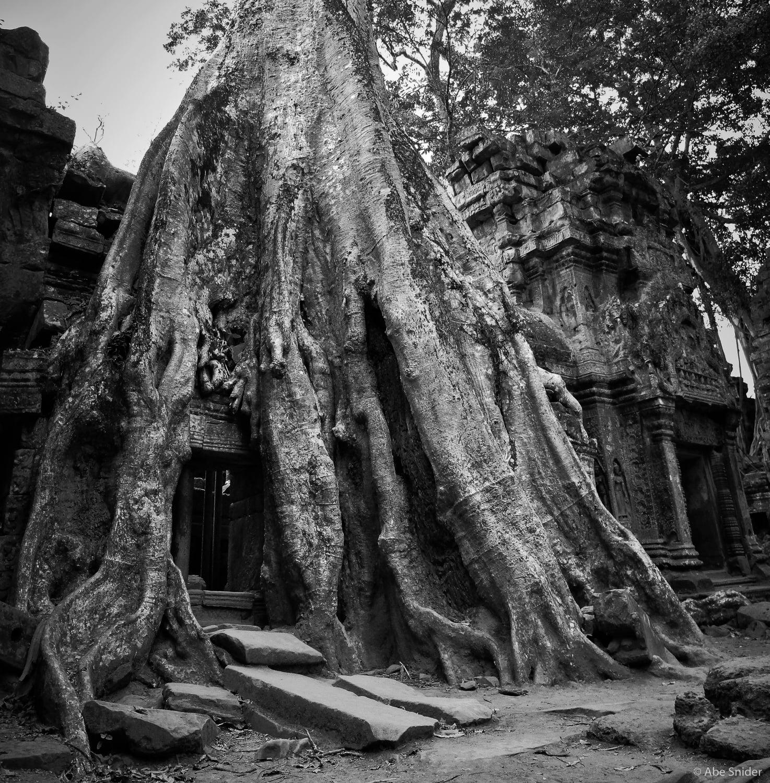Tree over Ta Prohm - Angkor Wat, Cambodia