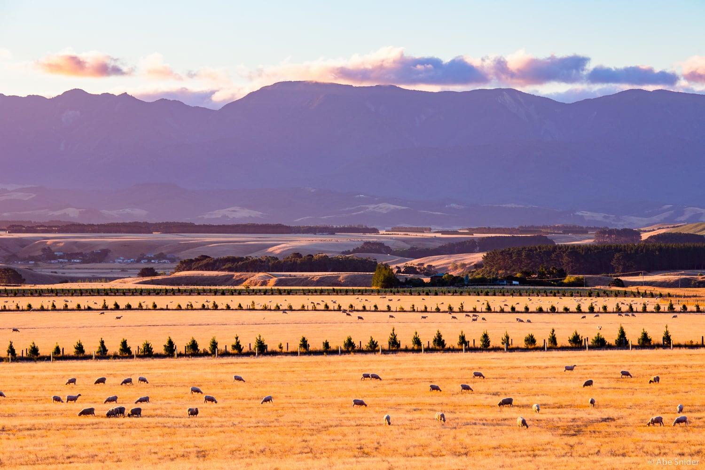 Pirinoa Farmland 2