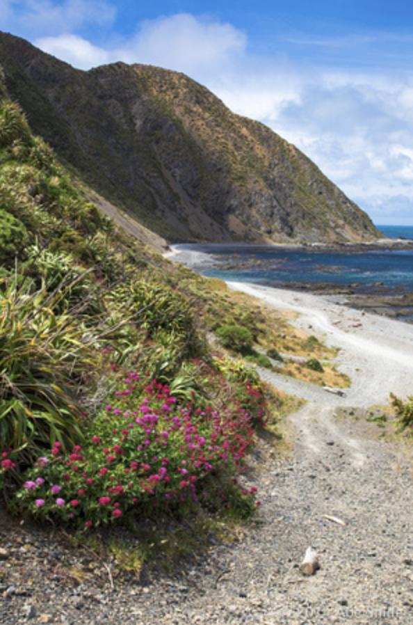 Cook Strait Walkway