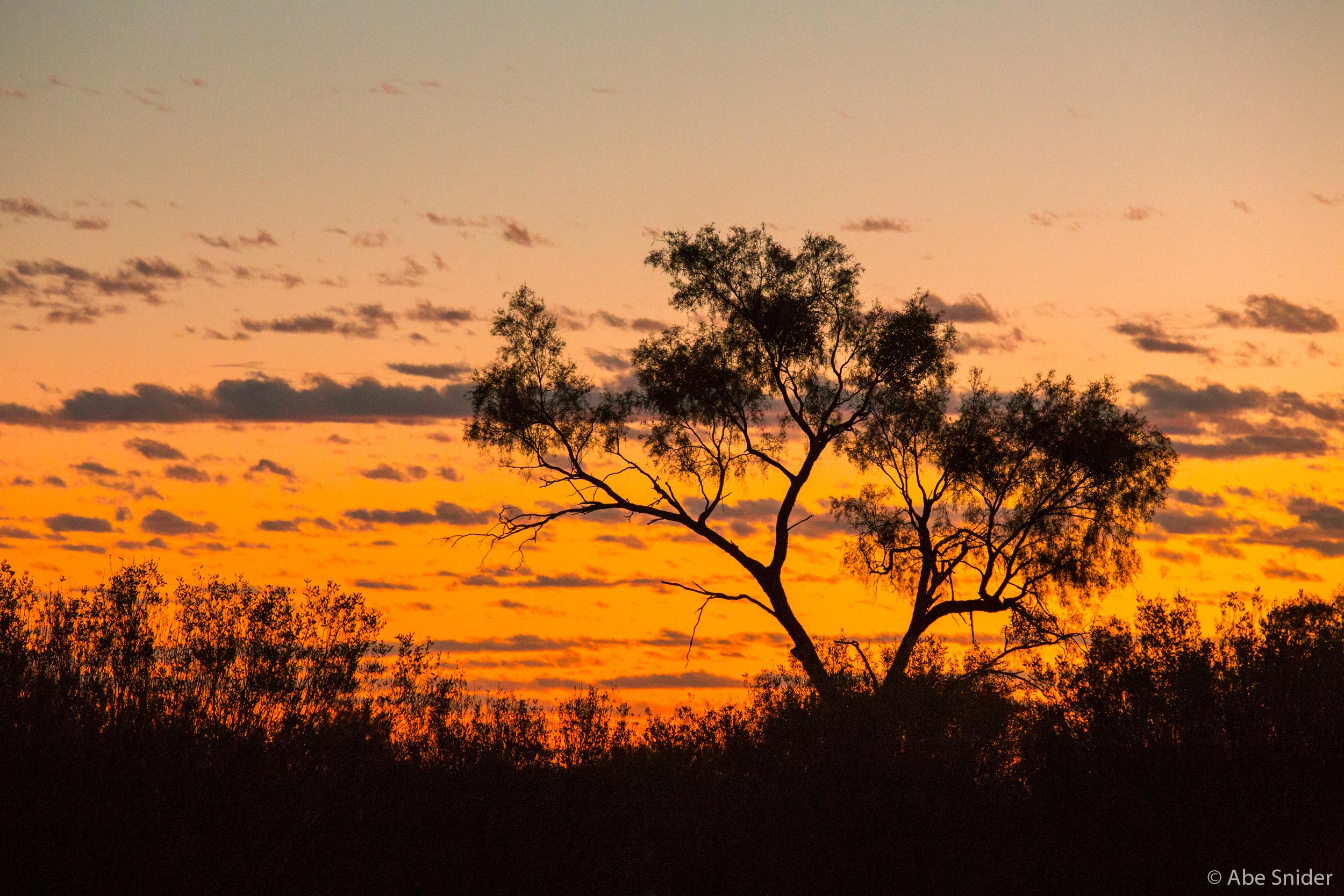One of the ironwood trees in the Kangaroo Sanctuary.