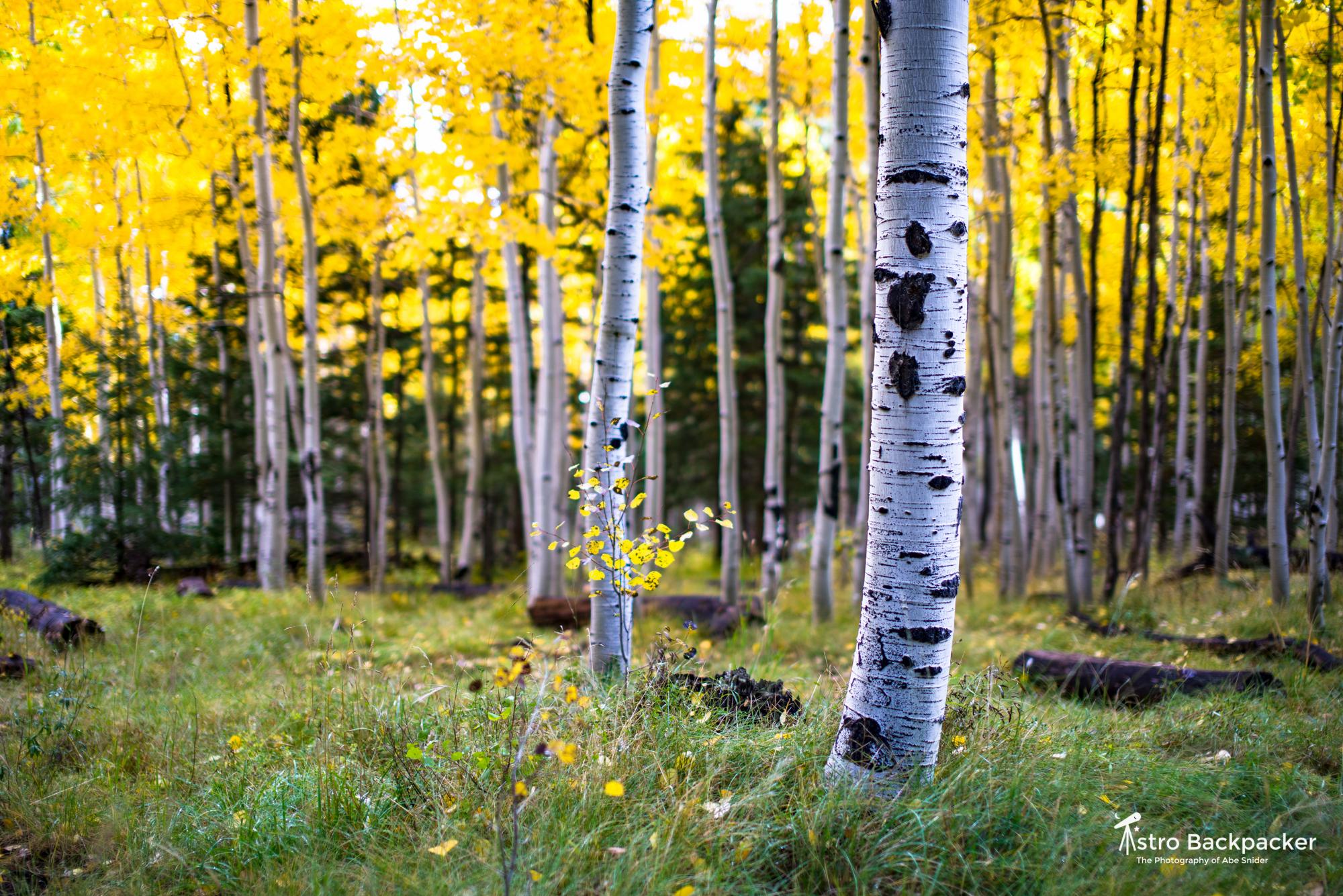 Locket Meadow Colors