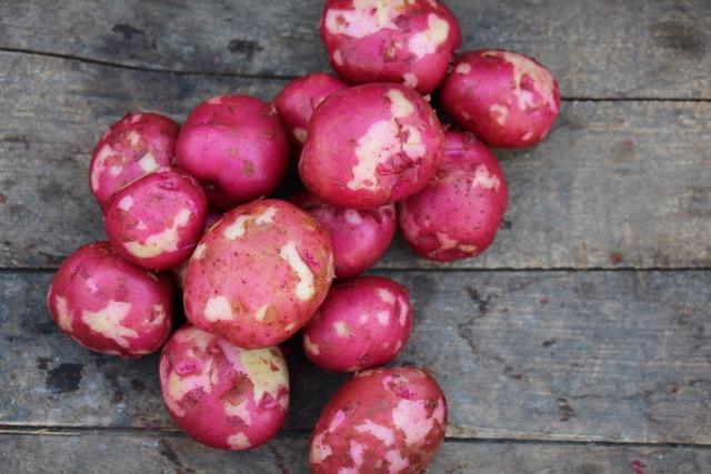 rednewpotatoes.JPG