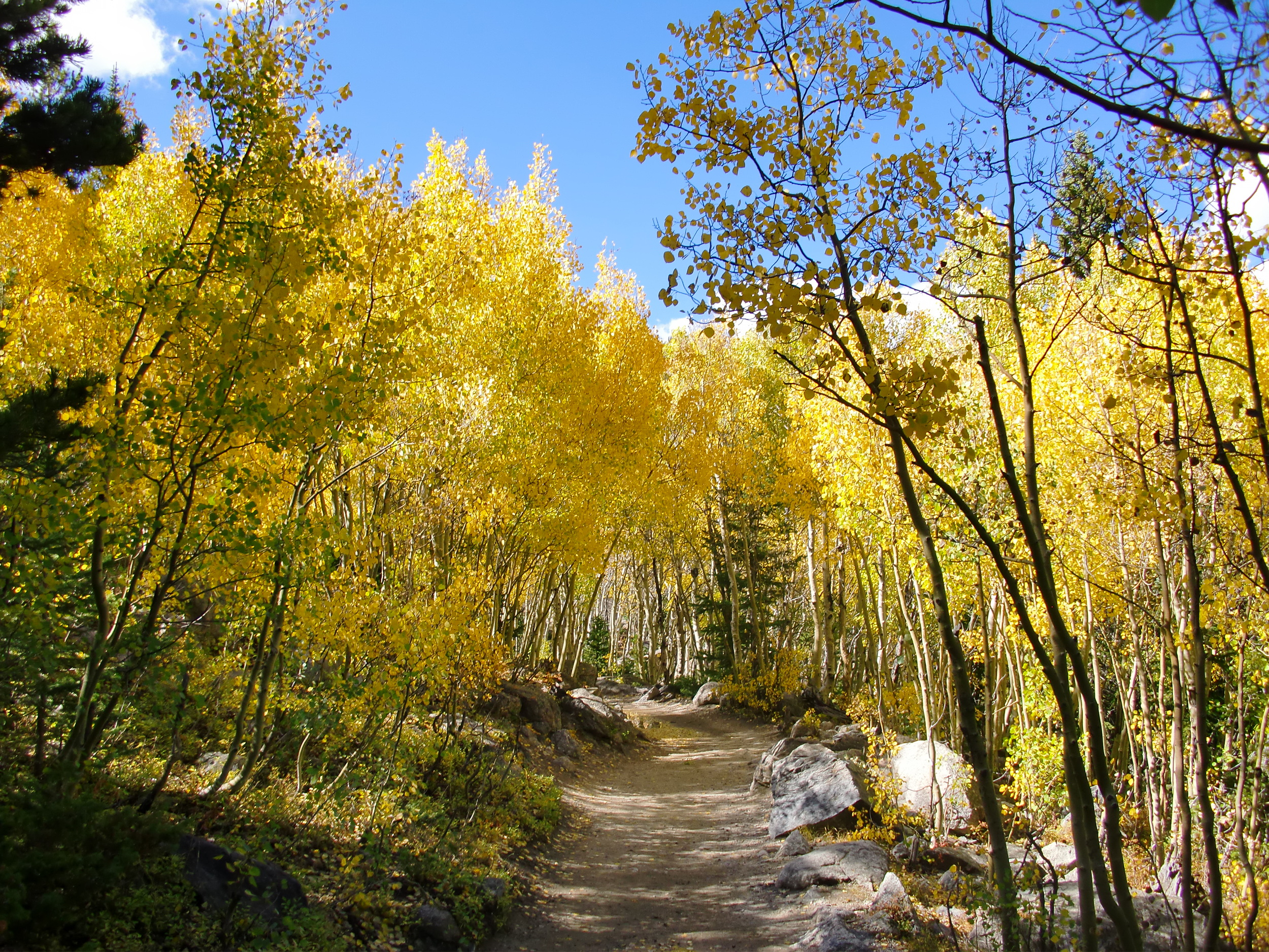 Trail to Alberta Falls in September...the aspen groves are beautiful!