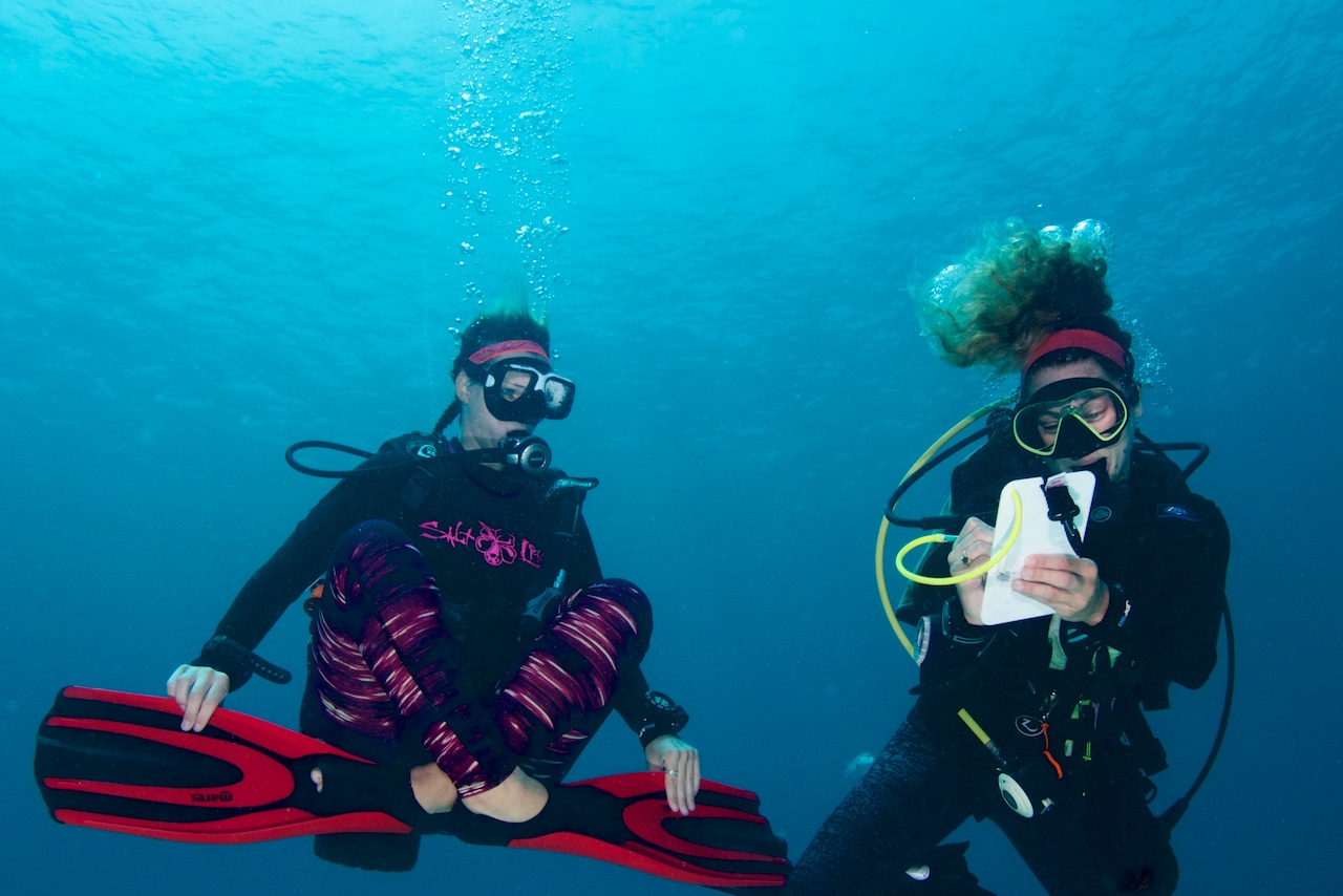 learn to dive st george bermuda scuba grotto bay resort.jpg