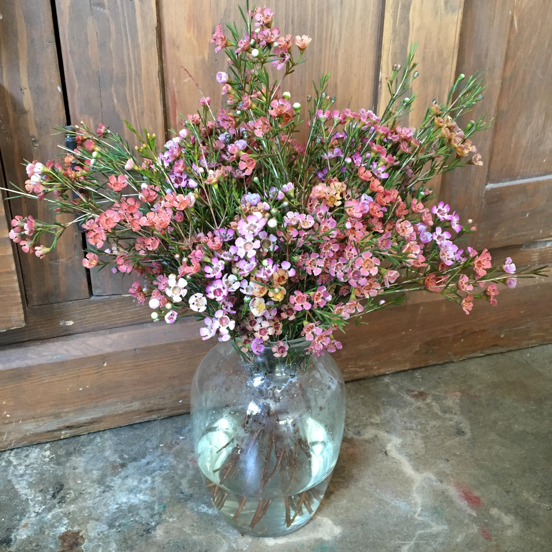 waxflowers.JPG