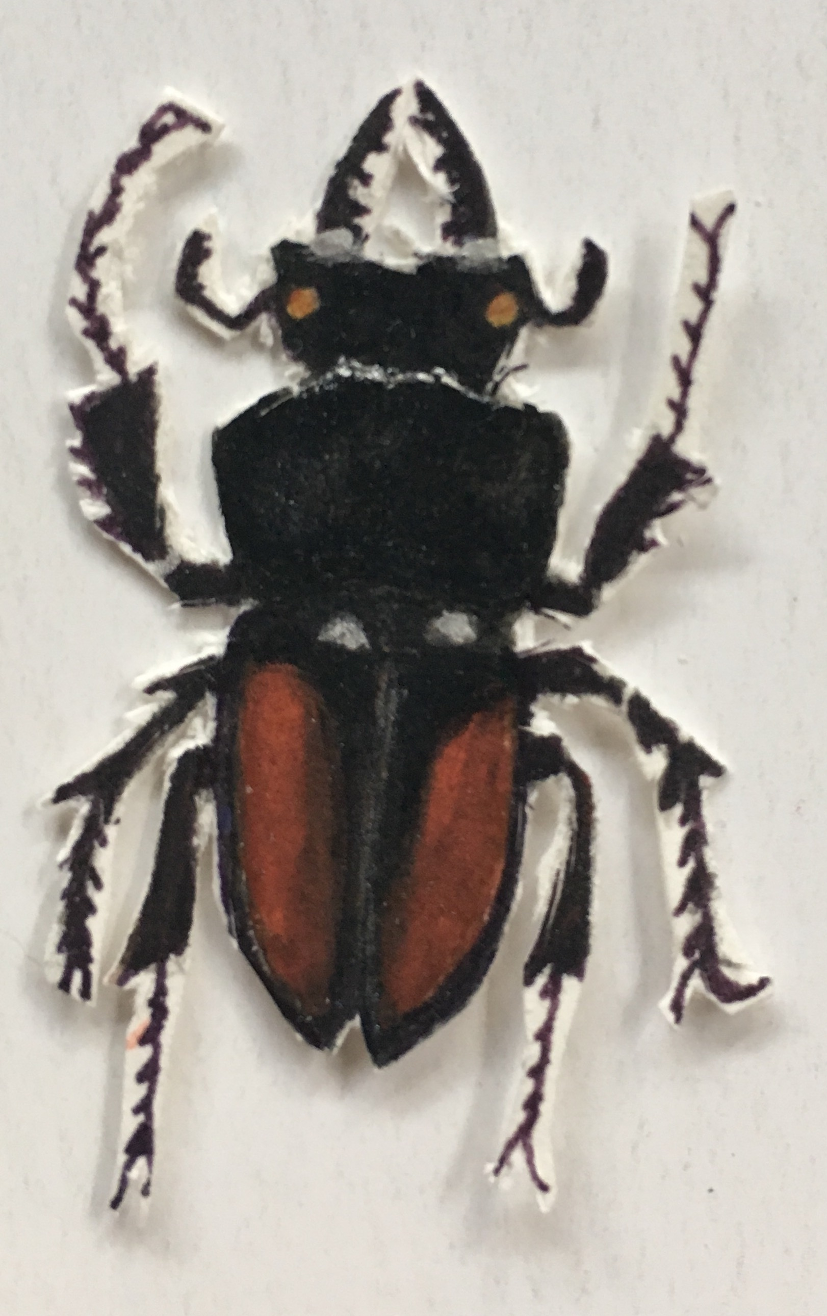 red bug cut out.jpg
