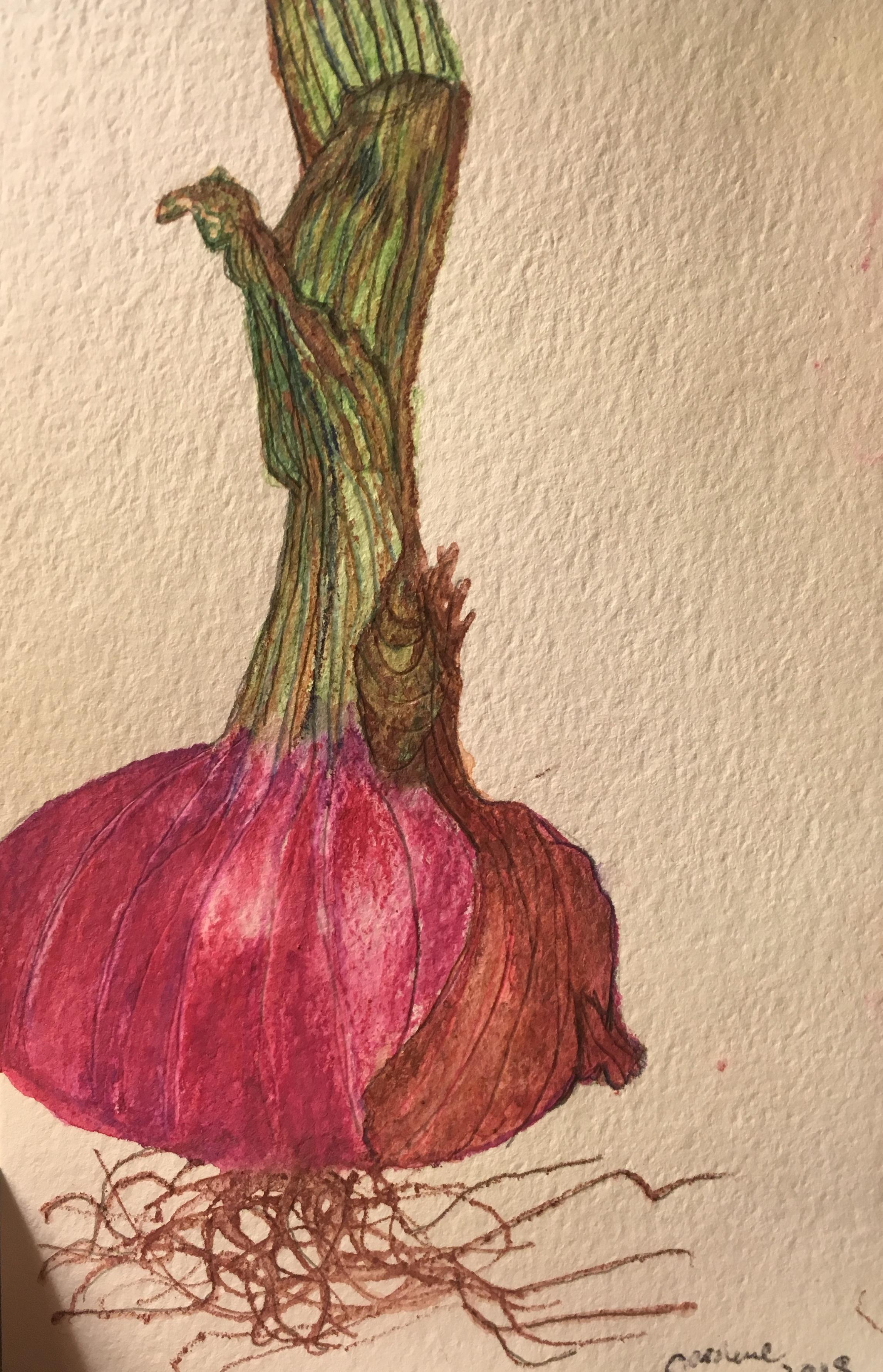 Watercolor pencil