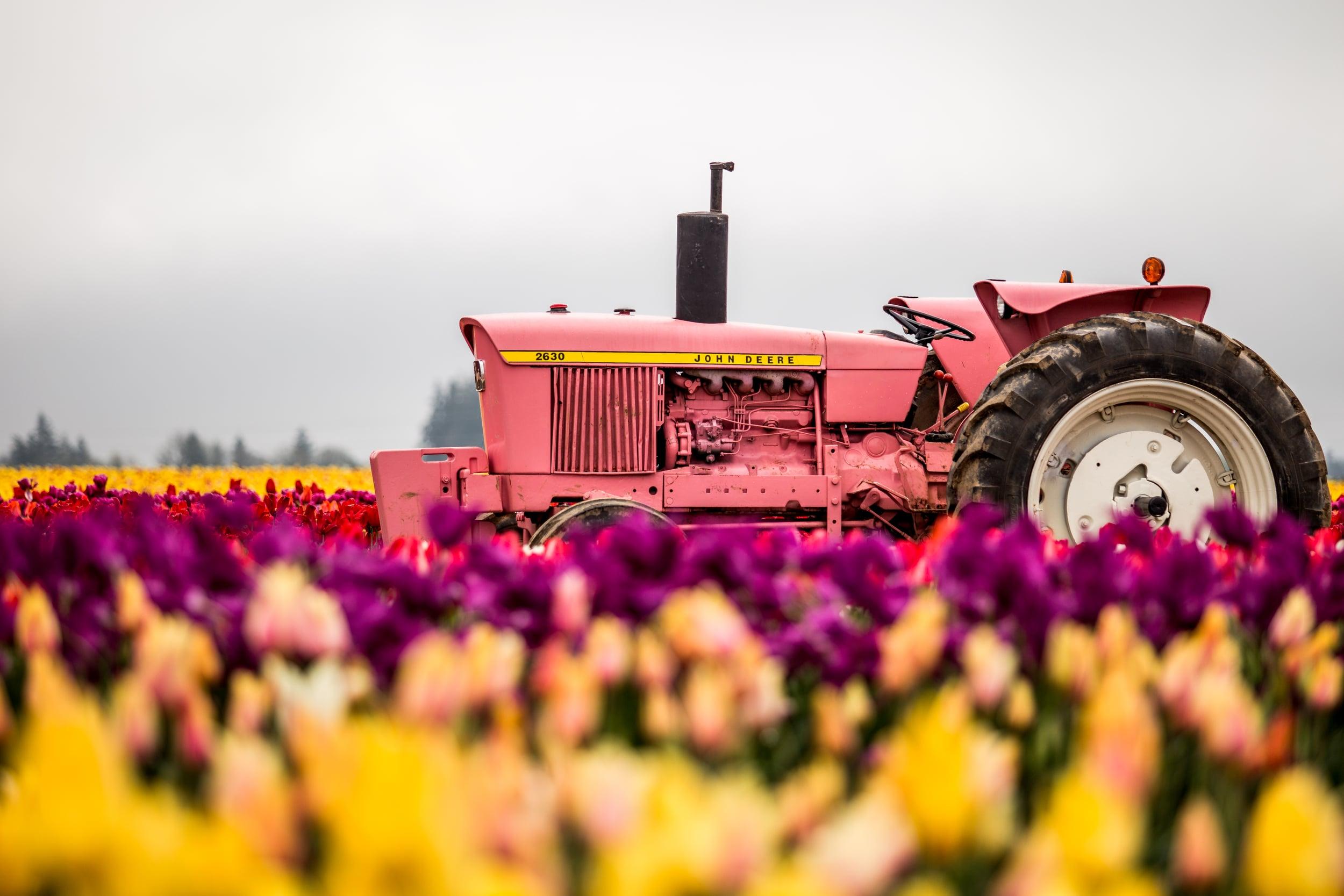 tulip-festival-2015-57.jpg