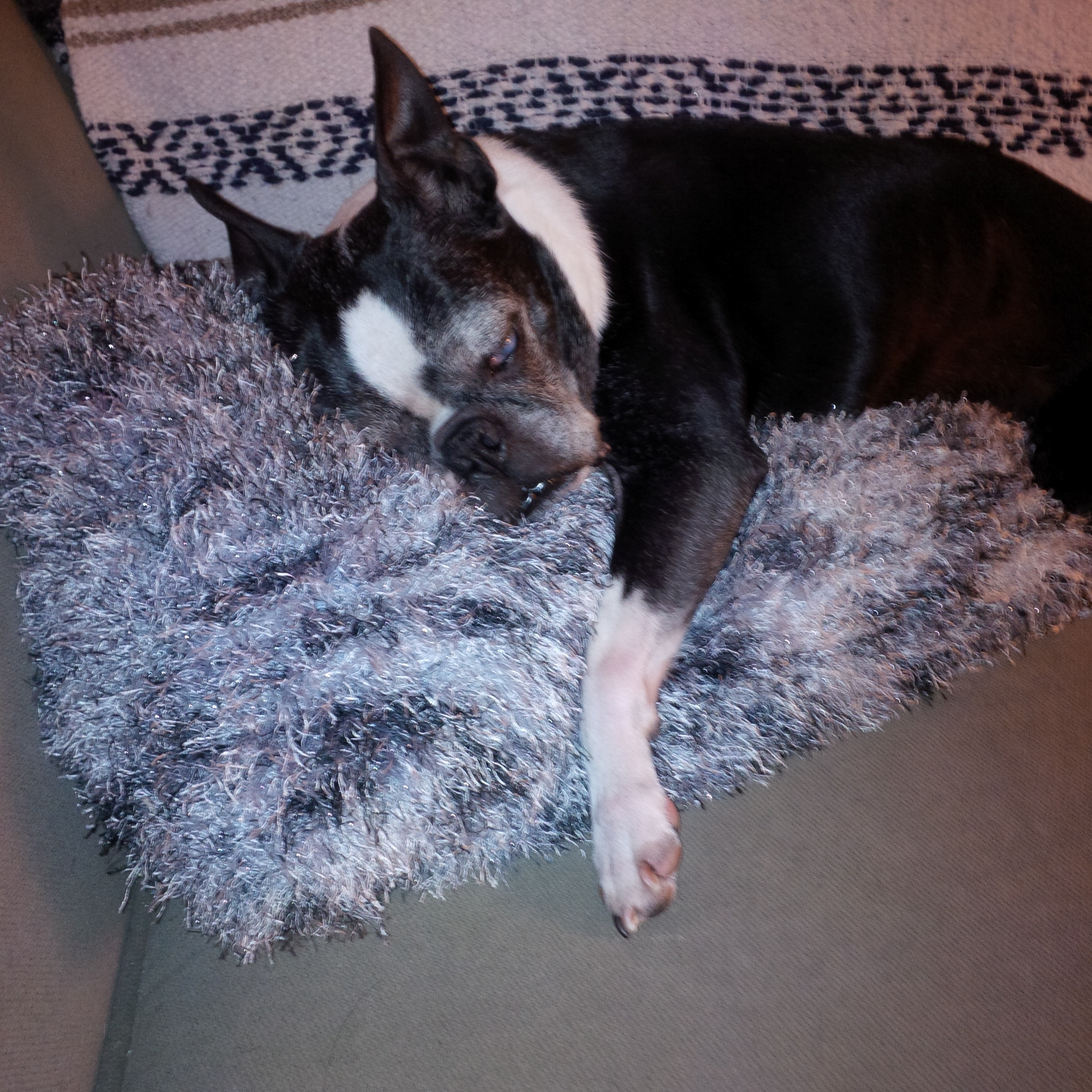 For a blind and deaf senior, he has no problem finding the coziest spot in any house!